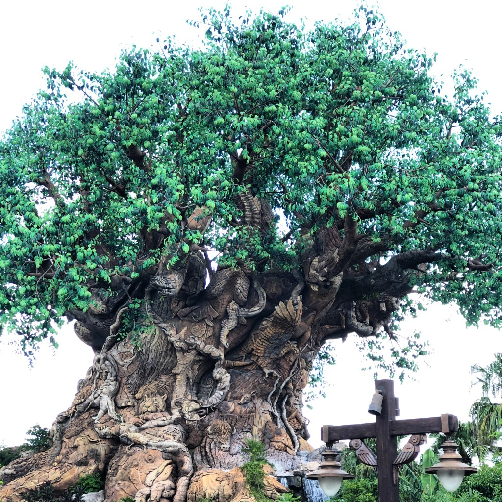 Traveling to Disney's Animal Kingdom? You've got to see the Tree of Life and all it's wonder. Also, don't miss our list of must-haves when traveling to the park.