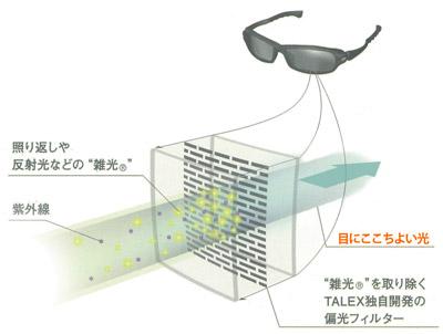 TALEX構造
