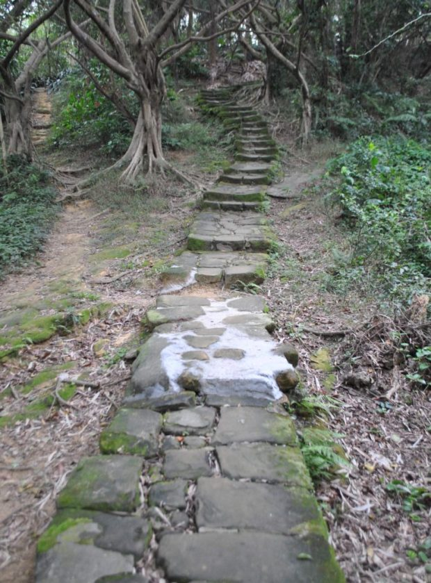 stone steps leading through the trees on Elephant Mountain, near Taipei