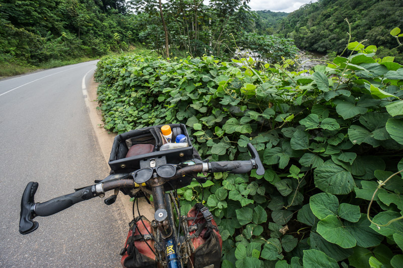 handlebars and bar bag of my bicycle leaning against a hedge of ferns along the highway in Gabon