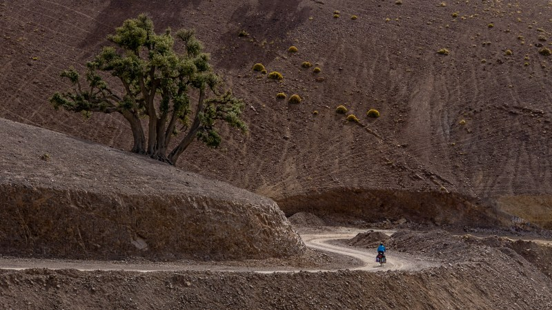 Cycling along a windy road past trees and bushes thriving in the dry brown soil of the High Atlas, Morocco