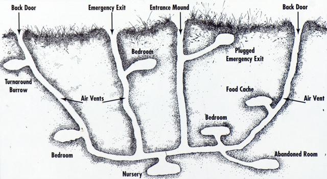 prairie dog burrow diagram