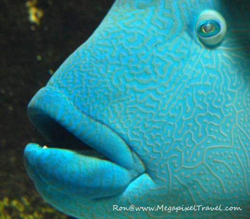 The Porte Dorée Aquarium - Paris, France