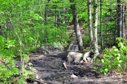 RON_3240-Marcy-trail