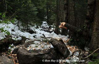 RON_3287-trail-clearing