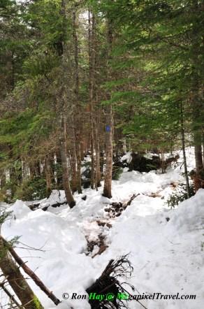 RON_3304-Trail