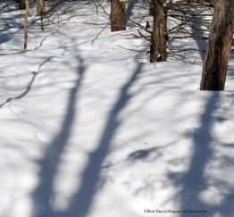 014_9207-shadow