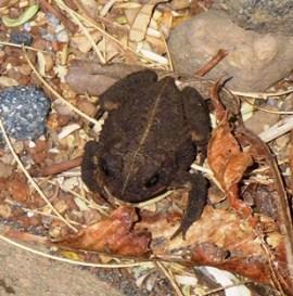 01-Froggie
