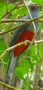 08-Bird02