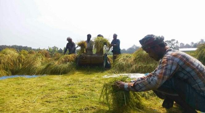 অসময়ে বৃষ্টি : লক্ষ্মীপুরের কৃষকরা চিন্তিত