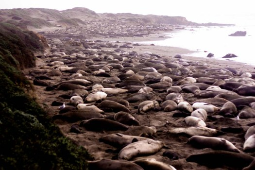 central coast getaway; meg marie wallace; elephant seal viewing point