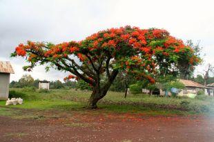 These trees say Tanzania to me