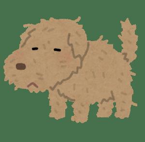 ボロボロの犬
