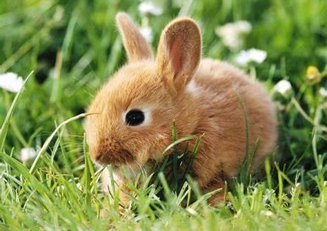 Quels sont les meilleurs accessoires lapin