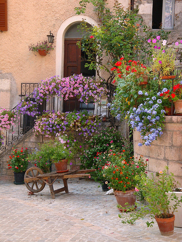 Village flowers by Durindarda
