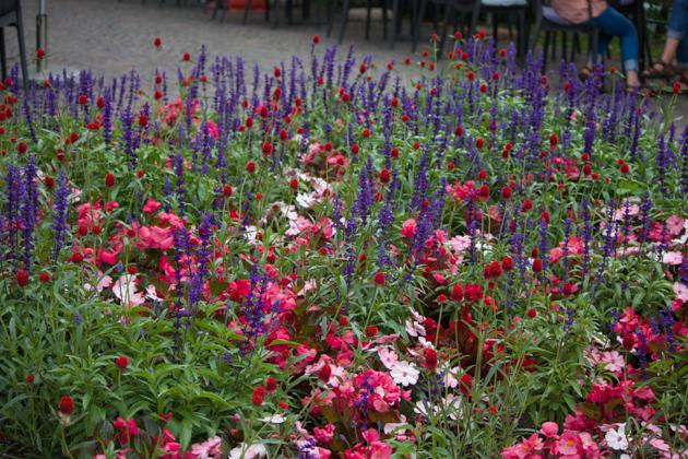 人行道旁的鲜花