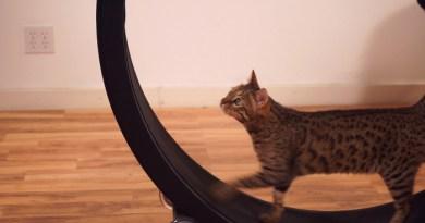 Ein Laufrad für Katzen. Bildquelle: Kickstarter.com / Sean Farley