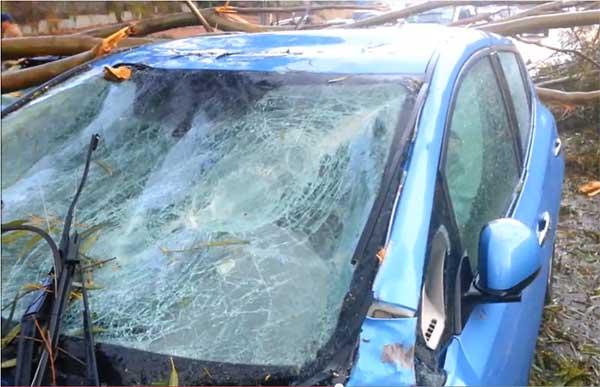 Ein Baum ist auf das Elektroauto Nissan Leaf gestürzt. Bildquelle: Daniel Wu / Youtube