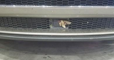 Motte schaltet den Autopiloten des Elektroauto Tesla Model S aus. Bildquelle: User Redebo von Reddit.com