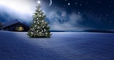 Weihnachtshütte mit einem Weihnachtsbaum. © by-studio - Fotolia.com