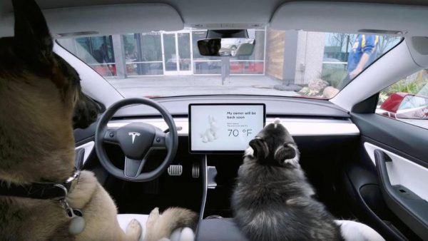 Die Elektroautos von Tesla haben nun auch den Dog Mode. Bildquelle: Tesla