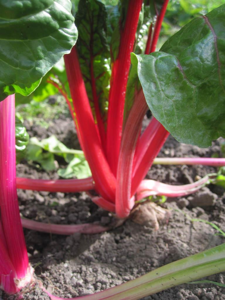 Gemüse Portraits Mein Garten Ratgeber