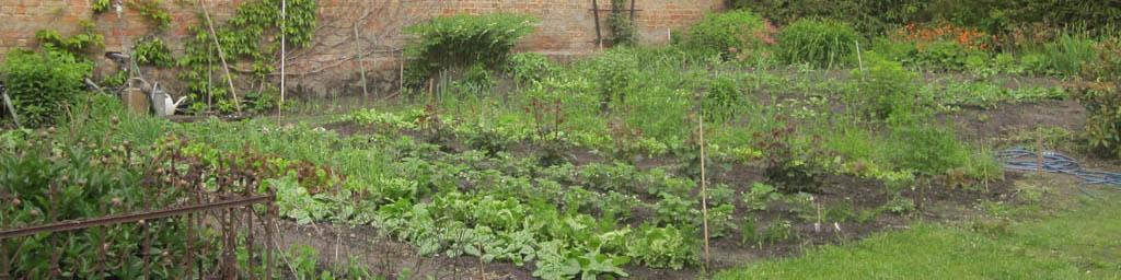 Aussaat 1 X 1 Der Aussaat Mein Garten Ratgeber