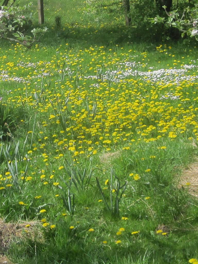 Unkraut im Rasen  Mein Garten Ratgeber