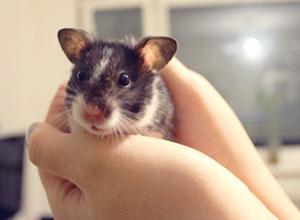 Hamster-richtig-halten
