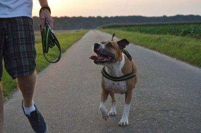 Hundesitter-auswählen