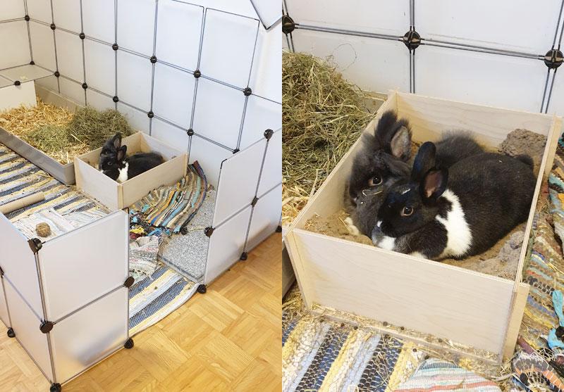 Kaninchen-in-Sandkiste