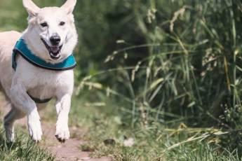Tipps zum Laufen mit Hund
