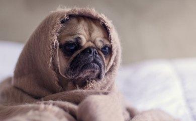 Gesundheitsfibel-Hund