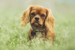 Gründe und Tipps, wenn der Hund plötzlich Gras frisst