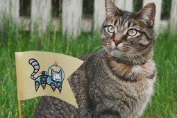 12 Eigenheiten von Katzen, die echt interessant sind