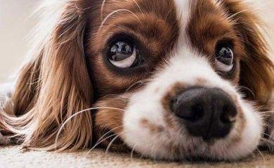 warum-jeder-einen-Hund-braucht
