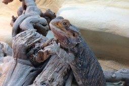 Umzug mit Terrarientieren – was du dabei beachten musst