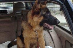 Mit Tieren im Auto unterwegs – das musst du dazu unbedingt wissen