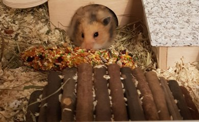Hamsterrassen