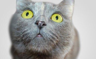 Homöopathie-bei-Katzen