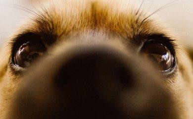 Hund-das-richtige-Haustier
