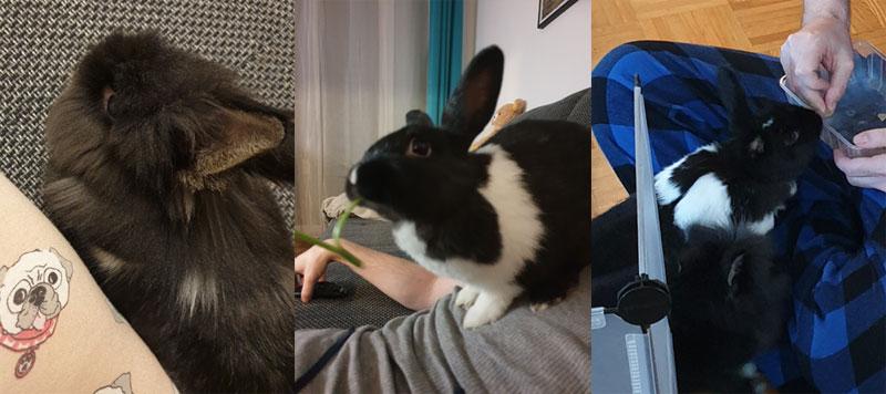 Kaninchen-kommen-von-selbst-zum-Kuscheln