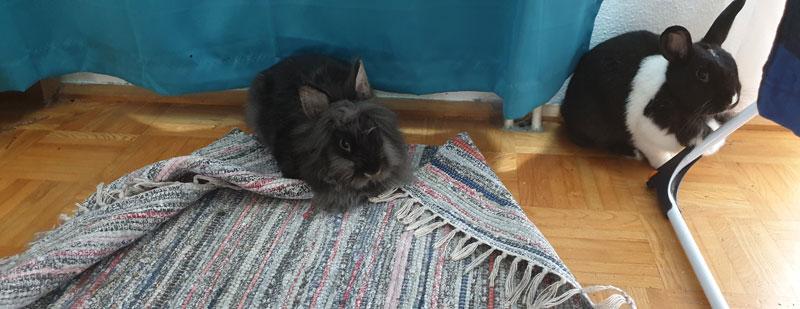 Kaninchen-und-ihr-Teppich
