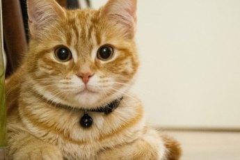 Katze-hat-Mundgeruch