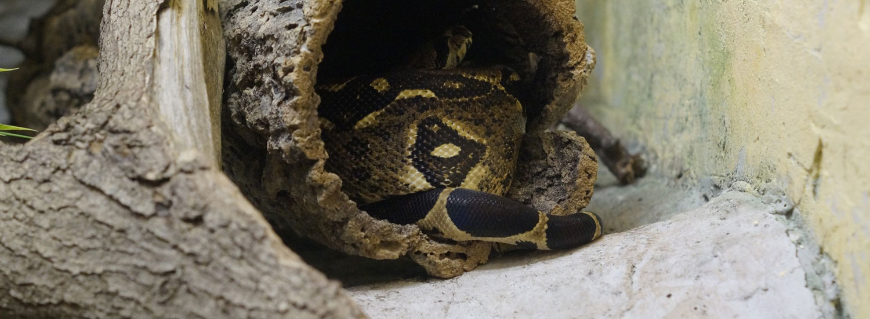 Schlange-Gesundheitsfibel