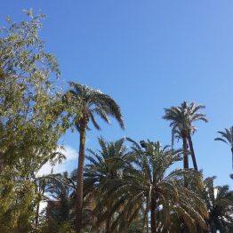 Palmengärten