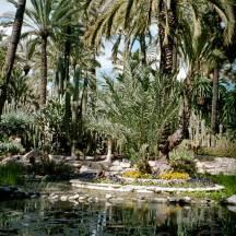 Erholung im Palmengarten