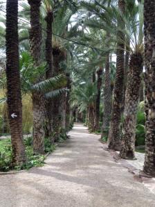 Palmen Allee in Elche