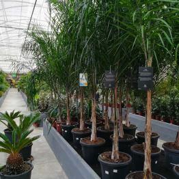 kleine Palmen und Sträucher