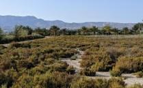 Das Naturschutzgebiet